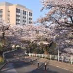 【最新版】千葉県の大学偏差値ランキング
